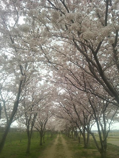 桜トンネル.JPG